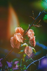 Saturated! (wei_shen0) Tags: leaves photography pic capture exposure canon vintagelenses vintage oldlens nature saturation flower