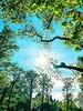 Instagram: ovsergey (SergeyOrlov) Tags: summer iphonephoto blue up green tree sky sun