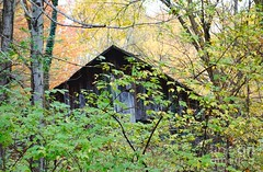 The lonely house (Aliceheartphoto) Tags: fineartamericaartist photography fineartamerica faa fineart trees naturephotography nature fall autumn foliage forest talltrees house woods houseinthewoods leaves season sony cybershot