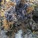 Jorunna funebris next to Blue jorunna sponge (Neopetrosia sp.)