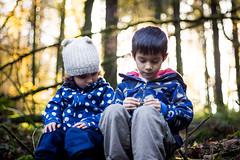Curragh Woods (davidbrookes) Tags: autumn curraghwoods midleton ireland woods