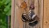 Wiedehopf bei der Fütterung seiner Jungen (Oerliuschi) Tags: wiedehopf fütterung jungvögel natur nahaufnahme kaiserstuhl nistkasten weinberge