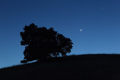 Lucas Valley Oak and Venus (fksr) Tags: dusk sky venus planet stars tree oak silhouette skyline landscape lucasvalley marincounty california