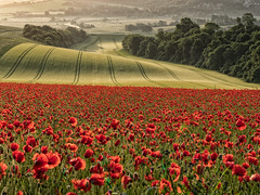 Poppies at Dawn (Eddie Hyde ARPS) Tags: landscape poppies sussex dawn sunrise southdowns