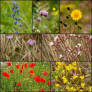 bloemen_dijk_collage