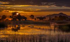 sunrise2 (joboss83) Tags: sunrise nature animal oiseaux sun soleil sauvage landscape paysage arbres lac étang fuji xt1 france var provence côté d azur couleurs paesaggio sole groupenuagesetciel