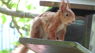 Eichhörnchen-Film...Teil 2