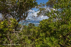 Lord Howe Island (Anna Calvert Photography) Tags: australia lordhoweisland adventure island landscape nature outdoors scenery sunrise beach lordhowe rocks surf dawn water oldsettlementbeach mountgower mountlidgbird lagoon trees forest jungle kim'slookout