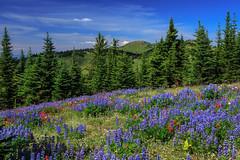 4P5C3528.jpg (Murray Foubister) Tags: flora 2012summersunpeaks