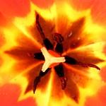 Heart of a Flower thumbnail