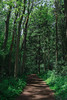 Woodland (MH Photography24) Tags: nature green woodland paths walk outdoors