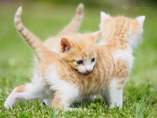 Playful siblings