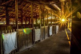 Charlotte Plains Shearing Shed