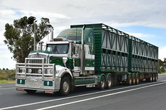 Simpson Livestock - Kenworth C509 (Scottyb28) Tags: kenworth simpson livestock truck trucks trucking highway haulage diesel interstate bdouble loaded cattle