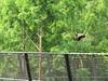 Panda BeI Bei (heights.18145) Tags: visitthezoo national zoo washingtondc animals pandas fun cute bamboo beibei tiantian meixiang