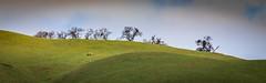Enlightenment (CDay DaytimeStudios w/1,000,000 views) Tags: california eastbay grass grassland hills hillside ridge ridgeline sanfranciscobayarea sunolca sunolpark sunolregionalpark sunolvalley trees