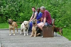 the dog walking crowd (helenoftheways) Tags: people dogs retriever germanshepherd bench ladywellfields london uk staffy mastiff littledoglaughedstories sit sitting seated