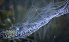little drops in net (drummerwinger) Tags: rot spinnennetz sigma canon80d gaden natur tropfen