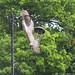 Upside down thief! (Tricia Laing) Tags: upsidedown squirrel 91118 animal