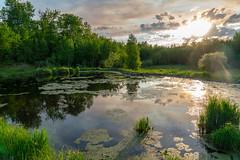 Elk Island National Park Shirley Lake trail (Peter Tieleman) Tags: alberta elk island national park sony sunset mosquitos moremosquitos abigfave