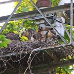 GT Hawk Nest - 0534 thumbnail