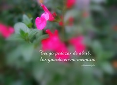 Frase: Tengo pedazos de abril, los guardo en mi memoria. (lameato feliz) Tags: frase primavera flor naturaleza