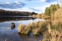 Cod Beck Reservoir (Benjamin Driver) Tags: warm 2018 spring water sheep wash sheepwash osmotherley moors moor north york yorkshire northyorkshire northyorkshiremoors northyorkmoors grass trees golden goldenhour hour light sun natural naturallight