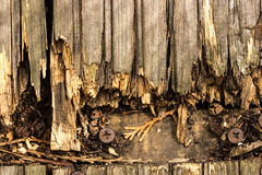 Must fix the decking... (Barrie T) Tags: macro home texture weatherbeaten wood