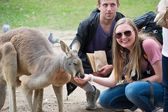Australia_2018-69.jpg (emmachachere) Tags: subtropical trees hike waterfall boatride springbrook australia rainforest kanagroo animals koala brisbane boat lonepinekoalasanctuary
