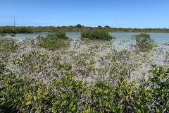 "For ""Best of Mangrove Scenery 2017"" competition. (Tim Kiser) Tags: 2017 20170413 april april2017 atlanticocean atlanticoceanlandscape bigtorchkey bigtorchkeylandscape dornroad florida floridakeys floridakeyslandscape floridalandscape floridamangroves img9004 middletorchkey middletorchkeylandscape monroecounty monroecountyflorida coastlandscape coastallandscape coastalplants coastalvegetation coastlinelandscape electriclines electricpoles halophytes landscape mangrove mangrovearea mangrovelandscape mangroveplants mangroveshrubs mangroveswamp mangroves mostlysunny oceanchannel oceanlandscape overheadelectriclines overheadpowerlines powerlines seascape shallowchannel shallowoceanchannel shallowwater shallows southflorida southernflorida sunnylandscape telephonepoles tropicallandscape tropicalplants tropicalvegetation utilitypoles"