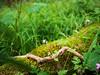 Blume und Moos (carsten.k.) Tags: moos blümchen blume