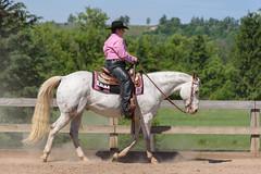 JBC_6017.jpg (Jim Babbage) Tags: krahc bethany appaloosa horses horseshow 2018