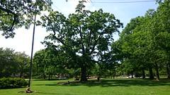 DSC_4425 (majorbonnet) Tags: tappansquare oberlincollege oberlin oaktree reunion rasmus flagpole swing gustav brian 2018