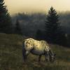 Horse in the Alps (Netsrak) Tags: pferd nebel wolke fog mist natur nature horse