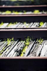 new growth (eb78) Tags: ca california sf sanfrancisco fishermanswharf abandoned rails railroad traintracks