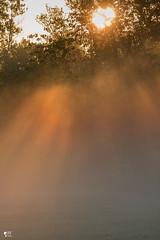 ''Nouveau départ!'' (pascaleforest) Tags: goldenhour heuredoré nouveaudépart light lumière sunrise levédusoleil passion nikon nature rayons vie life spring matin