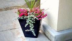 Flowers in planter! (Maenette1) Tags: flowers planter spring jacksfreshmarket menominee uppermichigan flicker365 allthingsmichigan absolutemichigan project365 projectmichigan