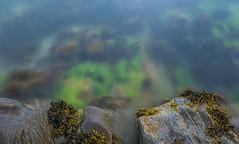 Loch Fyne Seaweed (Click And Pray) Tags: managedbyclickandpraysflickrmanagr watersedge horizontal nopeople argyll scotland waterside rocks seaweed lochfyne longexposure watersedgehorizontalnopeopleargyllscotlandwatersiderocksseaweedlochfynelongexposureardentinnygbr