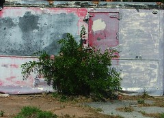 Icebox (jHc__johart) Tags: bush structure icebox container driveway weeds oklahoma