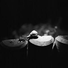 "La noche bocabajo (RoryO'Bryen) Tags: ""formatomedio"" ""mediumformat"" 120mm rodinal nightclub noche naturaleza caracol escargot snail night garden cambridgeuk cambridge roryobryen copyrightroryobryen rolleiflex rolleinar3 film kodaktrix selfdeveloped standdeveloped"