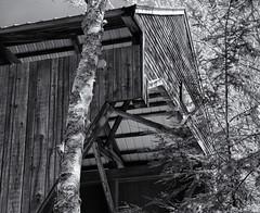 Below the bridge (Tim Ravenscroft) Tags: coveredbridge albany trees newhampshire monochrome blackandwhite blackwhite hasselblad hasselbladx1d x1d
