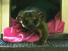 2018-06-07 Baxter quarantine (5)