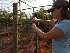 Volunteer building  rewilding cage