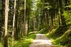 near Laubbach (BE) (Toni_V) Tags: m2407939 rangefinder digitalrangefinder messsucher leicam leica mp typ240 type240 28mm elmaritm12828asph hiking wanderung randonnée escursione jaunguggisberg bern kantonbern wanderweg alpenpanoramaweg switzerland schweiz suisse svizzera svizra europe wood forest green wald ©toniv 2018 180519