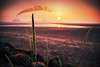 Wild grass (balb_kubrox) Tags: dublin morning sun rise port beach power station incinerator weed