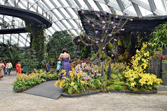 Orchids Display (chooyutshing) Tags: flowers orchids display cloudforest gardensbythebay baysouth marinabay singapore