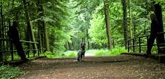 Trio (jueheu) Tags: dalmantiner dalmatiner menschen trio 3 outdoor canonphotography grün green nature natura natur tiefe hundeshooting hundefotografie dogphotography hauswelbergen brückengeländer