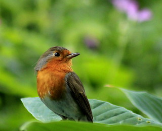 The messenger in my garden