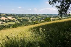 Landscape vista from Dumpdon Hill (Keith in Exeter) Tags: landscape vista devon dumpdon hill nationaltrust grass meadow cocksfoot tree shadow field sky farming