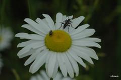 4-DSC_0028 (adamsshawn390) Tags: flowerwatcher
